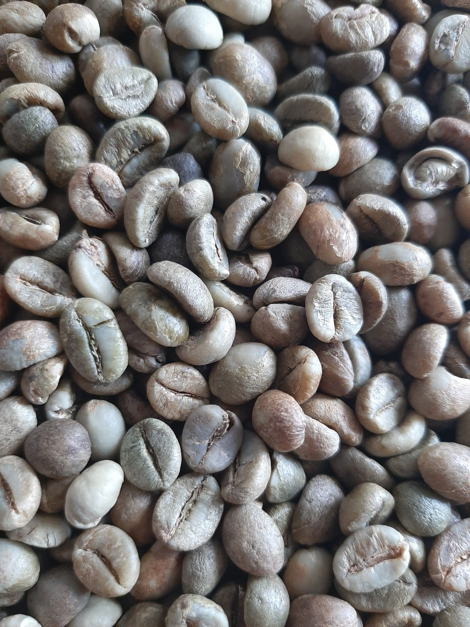 Dịch vụ cung cấp nguyên liệu chế biến cà phê
